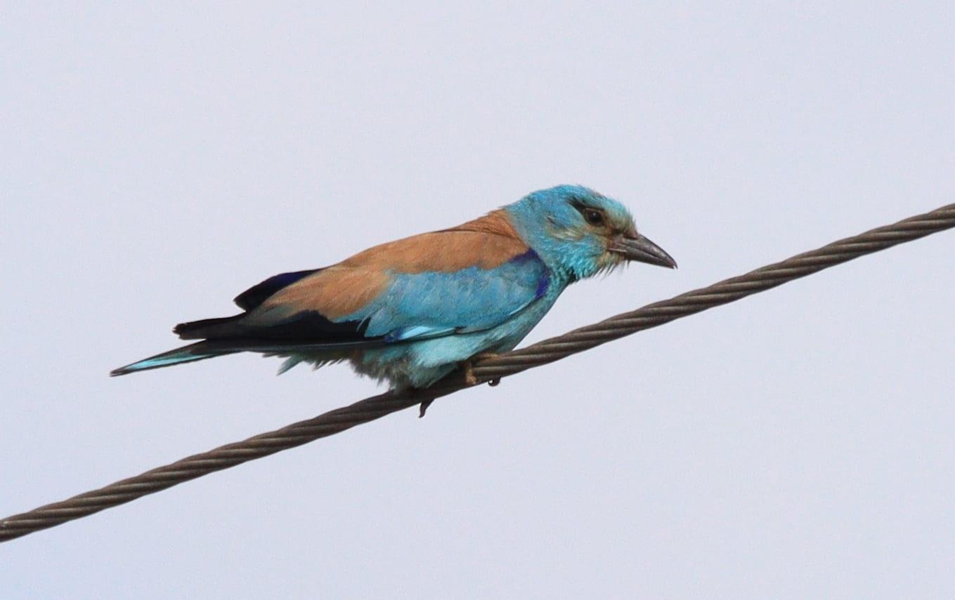 184 вида птици записаха природолюбителите в дните на Натура 2000