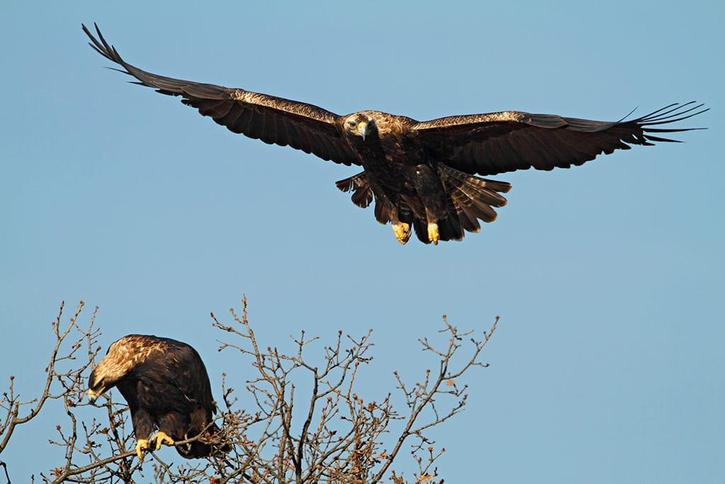 Кампания на Теленор събра 4150 лв. за дом за царския орел