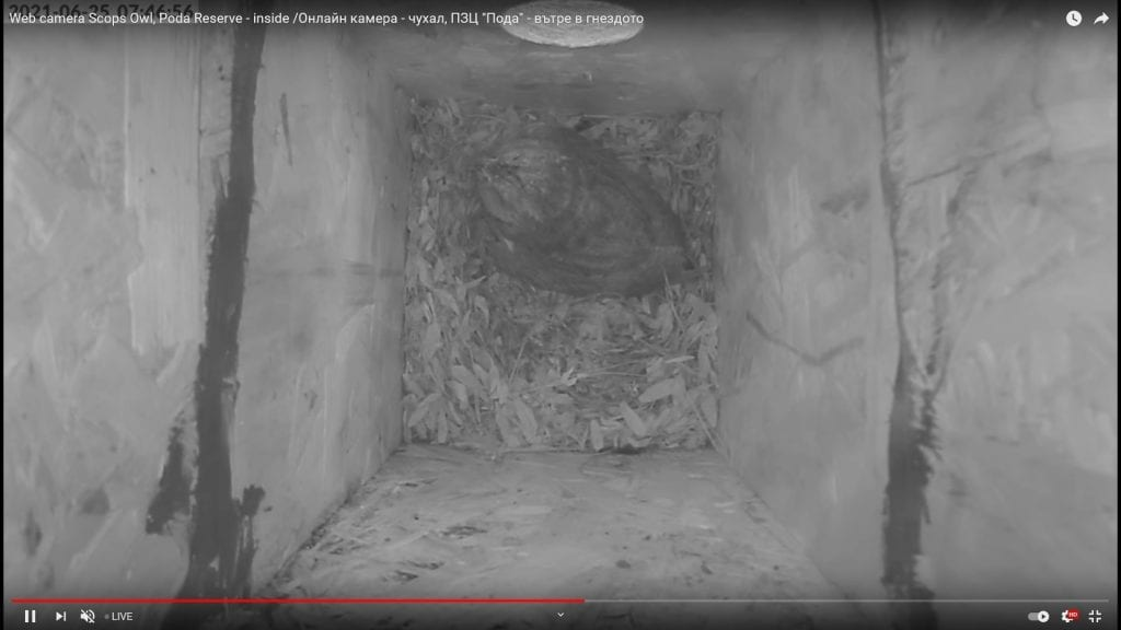 Кадър от камерата в гнездилка на чухал