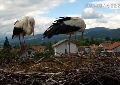 За ранения щъркел от гнездото в Ярлово