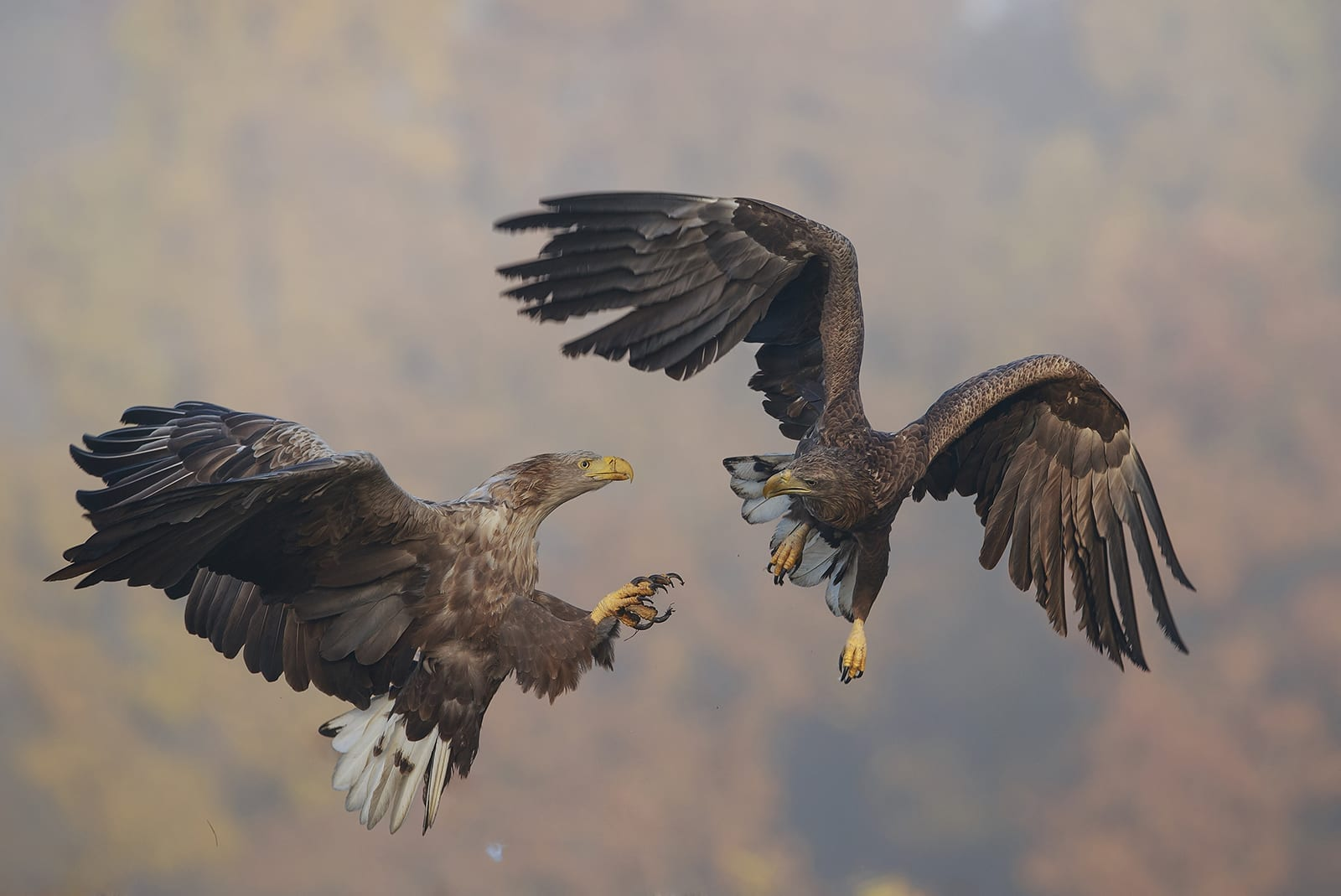 New project supports nature-friendly tourism and bird protection along Danube and in Western Stara Planina