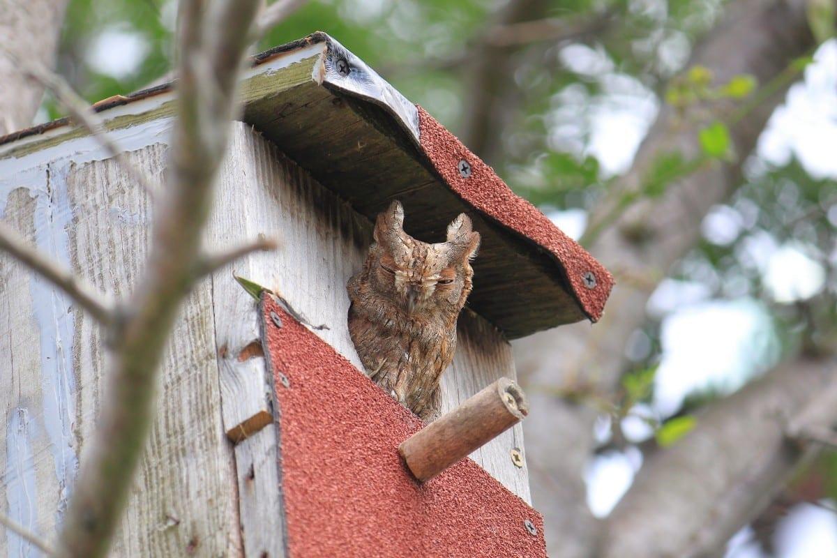 За първи път в света наблюдаваме онлайн гнездо на чухал