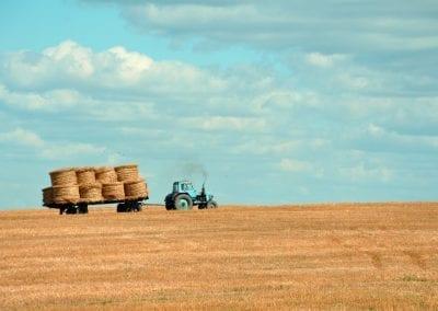 Новата Обща селскостопанска политика ще доведе до мащабно унищожаване на природата в Европа