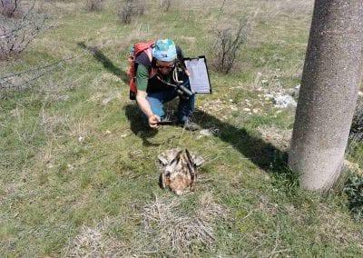 """Страртираха теренните проучвания по проект """"Безопасен полет за птиците на Дунав"""""""