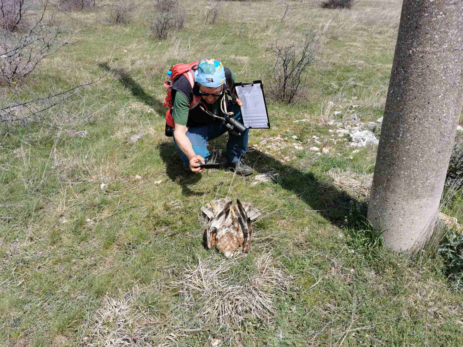 The field surveys under the LIFE Danube Free Sky project have started